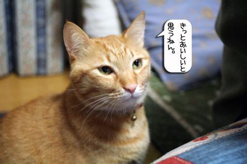 ネコと夫のおいしいギョーザのヒミツ_d0355333_16392384.jpg