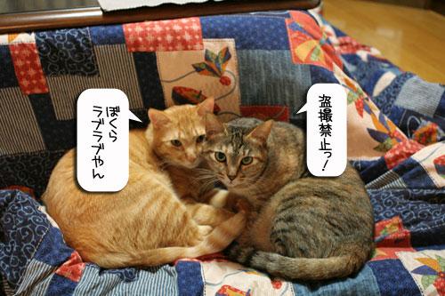 猫にもバレンタイン_d0355333_16392468.jpg