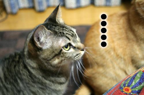 ネコと夫のおいしいギョーザのヒミツ_d0355333_16392483.jpg