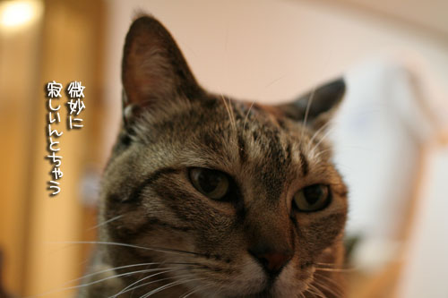 猫にもバレンタイン_d0355333_16392549.jpg