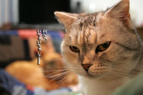 猫にもバレンタイン_d0355333_16392560.jpg