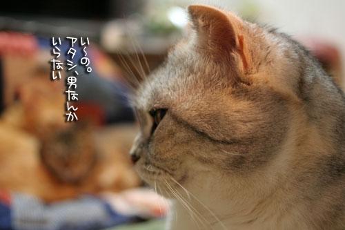 猫にもバレンタイン_d0355333_16392624.jpg