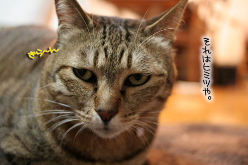 猫にもバレンタイン_d0355333_16392765.jpg