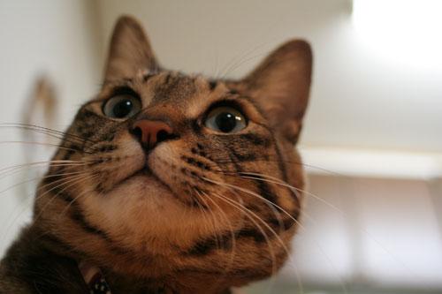 猫にもバレンタイン_d0355333_16392838.jpg