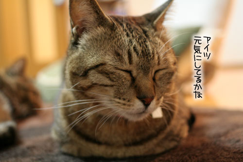 猫にもバレンタイン_d0355333_16392853.jpg
