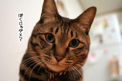 猫にもバレンタイン_d0355333_16392933.jpg
