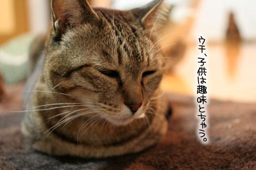 猫にもバレンタイン_d0355333_16392947.jpg