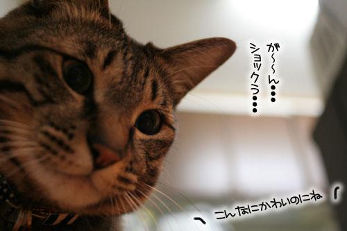 猫にもバレンタイン_d0355333_16392950.jpg