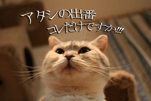 猫にもバレンタイン_d0355333_16393072.jpg