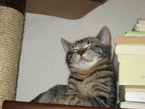 猫にもバレンタイン_d0355333_16393219.jpg