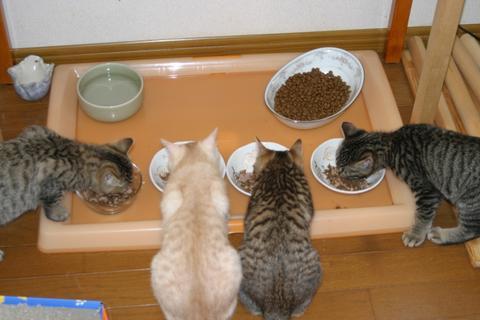 猫にもバレンタイン_d0355333_16393274.jpg