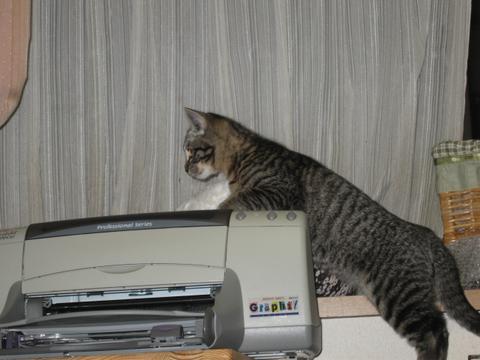 猫にもバレンタイン_d0355333_16393433.jpg