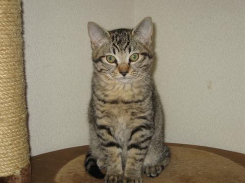 猫にもバレンタイン_d0355333_16393467.jpg