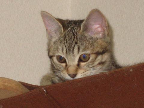 猫にもバレンタイン_d0355333_16393556.jpg