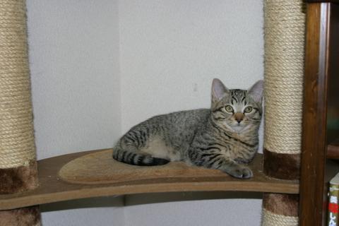 猫にもバレンタイン_d0355333_16393650.jpg