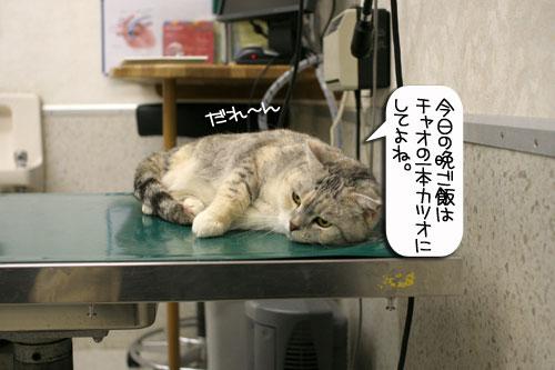診察台でもくつろげるネコ_d0355333_16394254.jpg