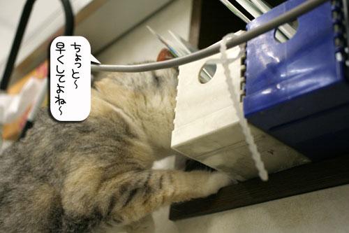 診察台でもくつろげるネコ_d0355333_16394301.jpg