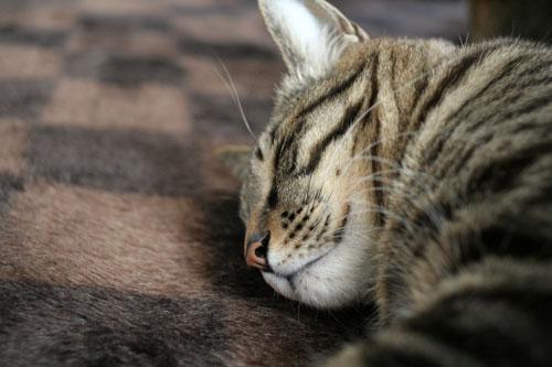 猫の寝顔ってステキ_d0355333_16394420.jpg