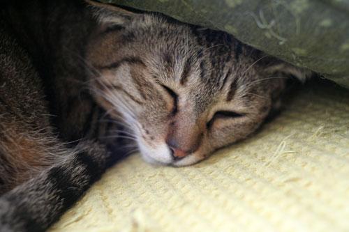猫の寝顔ってステキ_d0355333_16394643.jpg