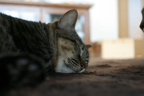 猫の寝顔ってステキ_d0355333_16394663.jpg