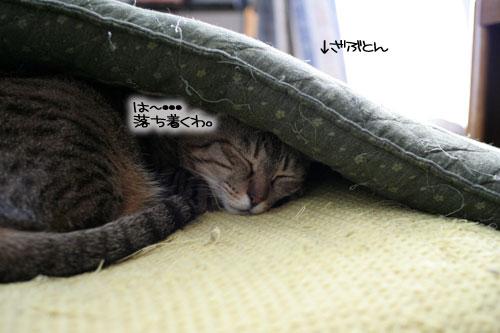 猫の寝顔ってステキ_d0355333_16394723.jpg