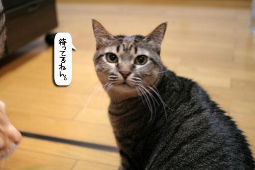 魚を焼いたら猫集合_d0355333_16400430.jpg