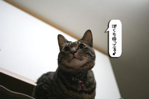 魚を焼いたら猫集合_d0355333_16400490.jpg