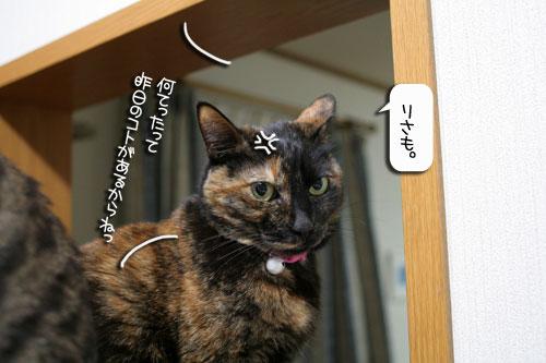魚を焼いたら猫集合_d0355333_16400564.jpg