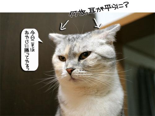 魚を焼いたら猫集合_d0355333_16400583.jpg