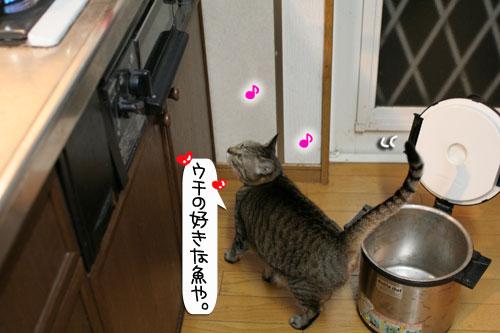 魚を焼いたら猫集合_d0355333_16400678.jpg
