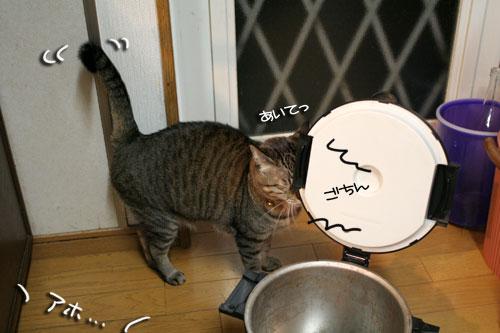 魚を焼いたら猫集合_d0355333_16400699.jpg