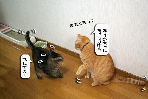 魚を焼いたら猫集合_d0355333_16400740.jpg