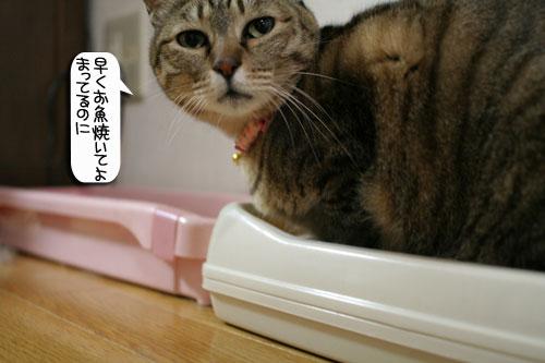 魚を焼いたら猫集合_d0355333_16400854.jpg