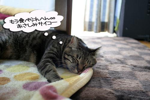 寝子は寝ててもネタになるね?_d0355333_16405303.jpg
