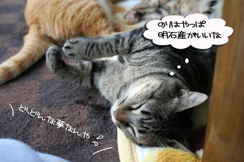 寝子は寝ててもネタになるね?_d0355333_16405319.jpg