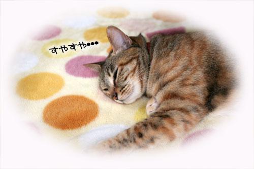 寝子は寝ててもネタになるね?_d0355333_16405528.jpg