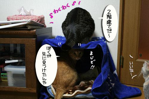 猫マンション(屋上つき)★追記あり_d0355333_16410413.jpg