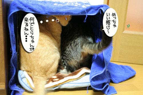 猫マンション(屋上つき)★追記あり_d0355333_16410442.jpg