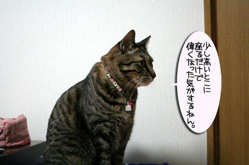 猫マンション(屋上つき)★追記あり_d0355333_16410530.jpg