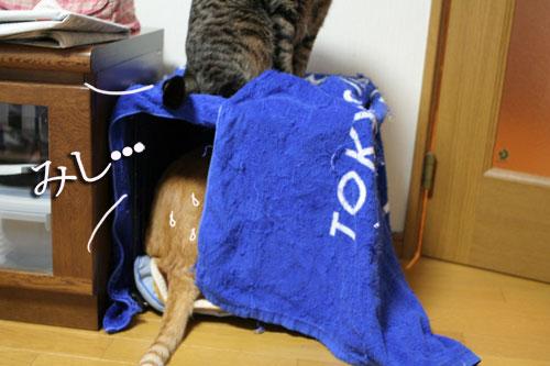 猫マンション(屋上つき)★追記あり_d0355333_16410563.jpg