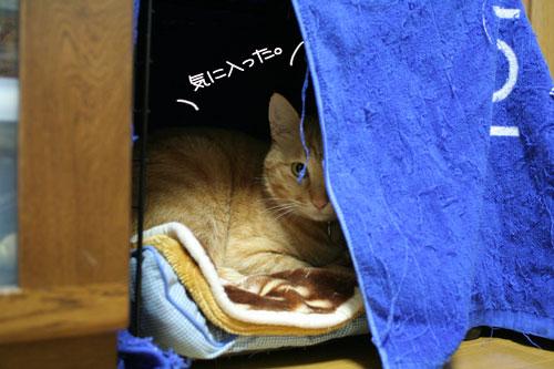 猫マンション(屋上つき)★追記あり_d0355333_16410614.jpg