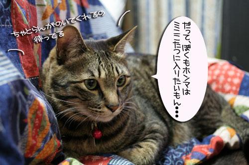 猫マンション(屋上つき)★追記あり_d0355333_16410635.jpg