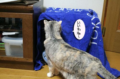 猫マンション(屋上つき)★追記あり_d0355333_16410717.jpg