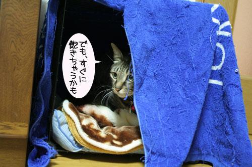 猫マンション(屋上つき)★追記あり_d0355333_16410732.jpg