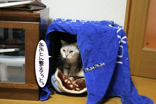 猫マンション(屋上つき)★追記あり_d0355333_16410856.jpg