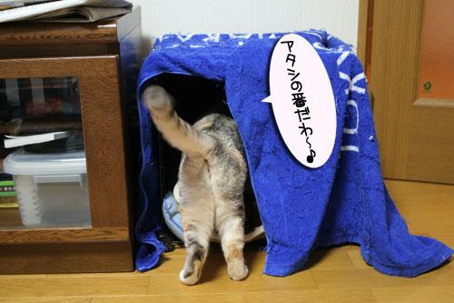 猫マンション(屋上つき)★追記あり_d0355333_16410860.jpg