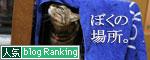 猫マンション(屋上つき)★追記あり_d0355333_16411059.jpg