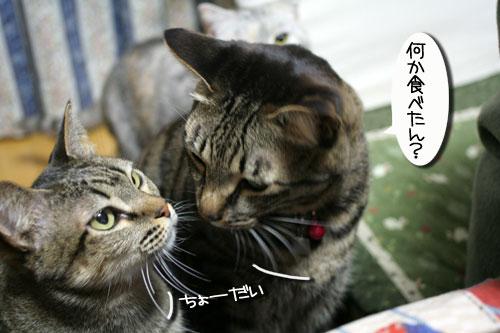 関西名物粉モンパーティ_d0355333_16413202.jpg