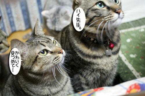 関西名物粉モンパーティ_d0355333_16413336.jpg