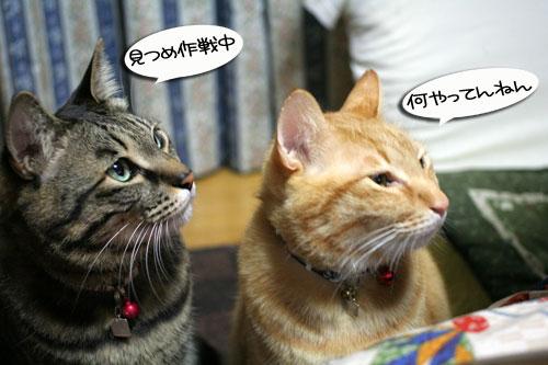 関西名物粉モンパーティ_d0355333_16413394.jpg